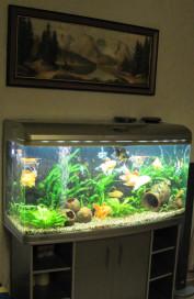 аквариум_1