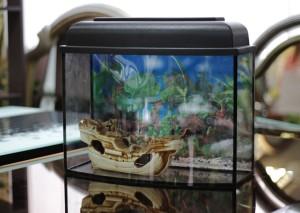 аквариум-телевизор