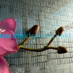 Зеркало-SMC-015-Занавес-беcцветный