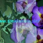 Орхидея бесцветная