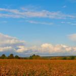 Панорама-306