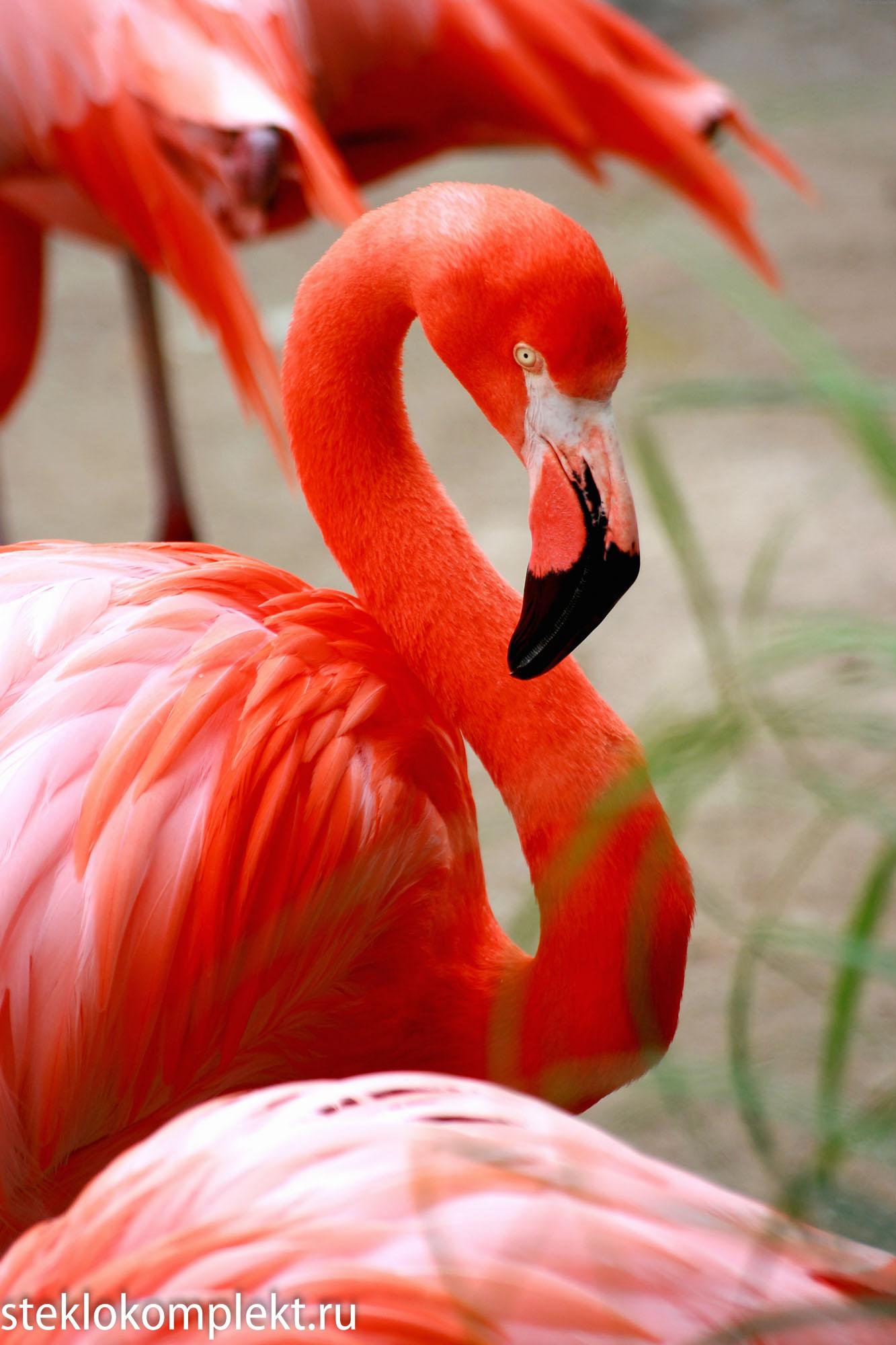 Розовый фламинго производил транссексуал 11 фотография